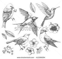 Set of of birds and flowers, line drawings, ink drawing, hand drawn illustration, Vector - koop deze stockvector op Shutterstock en vind andere afbeeldingen. Blue Drawings, Ink Drawings, Animal Drawings, Drawings Of Birds, Bird Line Drawing, Drawing Hands, Drawing Flowers, Sparrow Drawing, Vogel Illustration