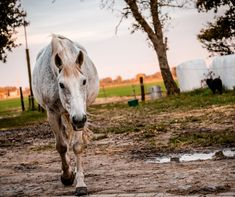Don't get stuck with a muddy, messy, unhealthy living space for your horse. Learn top tips for mud control from a veterinarian who's seen it all. Show Jumping Horses, Show Horses, Horse Stables, Horse Barns, Barrel Racing Tips, Horse Riding Tips, Trail Riding, Horse Exercises, Horse Care Tips