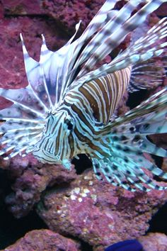 Saw a lion fish on our dive in Aruba