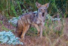 Image result for north america desert animals