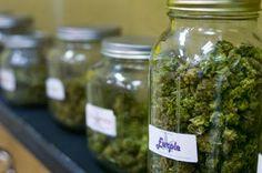 Legalizing Recreational Marijuana Could Combat California's Drought ! | GeekyWeby