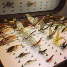 Fly box from Jazz and Fly Fishing.