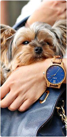 Photo @my_bella_yorkie of IG   Featured watch: Frankie Zebrawood & Navy