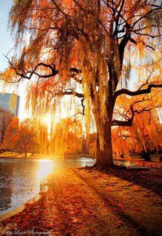 .Autumn Morning!