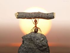 Best Ant Picture Ever