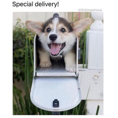 Funny Dog Memes – 50 Pics
