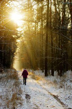 Zimowy las miechowicki. Bytom   fot. Wojciech Sokolnicki