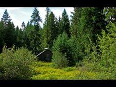 Az erdő éneke. / Anzan - Peaceful Passage - Relaxation / - YouTube