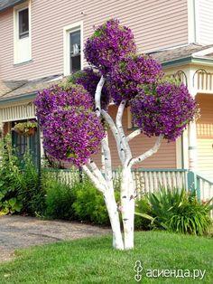 «Деревья» из петуний: Группа Клумбы и цветники