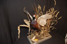 Just completed this Flushing Pheasant mount for 1 of my customers. Deer Hunting Tips, Hunting Stuff, Pheasant Mounts, Artwork, Wildlife, Decor Ideas, Outdoors, Future, Room