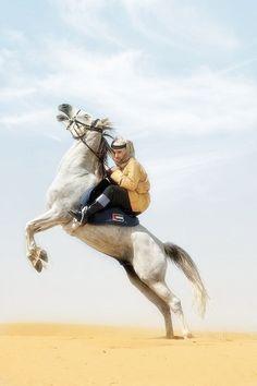 Horses me. Arabian Art, Arabian Beauty, Prince Crown, Royal Prince, Beautiful Horses, Beautiful Men, Pretty Horses, Prince Mohammed, Ariana Grande Outfits