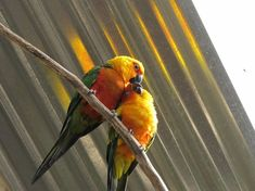 #wildlife #wildlifephotography #southafricanwildlife #amateurphotography #parrots #butterflyworld