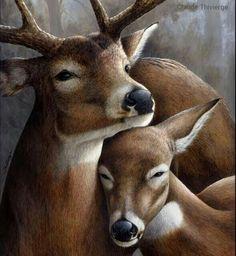 As Cosy As Can Be — deeyr: Clair de Lune (Moonlight), Claude. Wildlife Paintings, Wildlife Art, Animal Paintings, Animal Drawings, Whitetail Deer Pictures, Deer Photos, Paar Illustration, Deer Drawing, Hunting Art