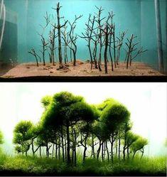 Креветки. Мхи. Аквариумные растения.
