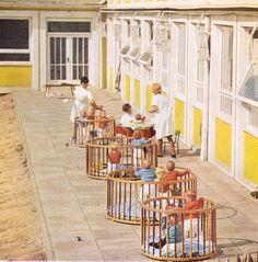 》Ostprodukt: Meine Kinderkrippe und auch mein Kindergarten danach sahen fast identisch aus. Sogar die Verteilung von Gebäude, Sandkasten und des Pflasterstein-Weges ist genau wie auf dem Bild - irgendwie gruselig.《