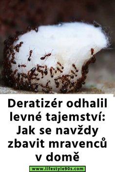 Deratizér odhalil levné tajemství: Jak se navždy zbavit mravenců v domě Cleaning, Food, Essen, Meals, Home Cleaning, Yemek, Eten