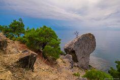 Фотограф Алексей Королёв (Aleksey Korolyov) - Деревья Нового Света #1705175. 35PHOTO