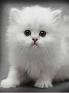 Animated baby Kittens | Share this article :