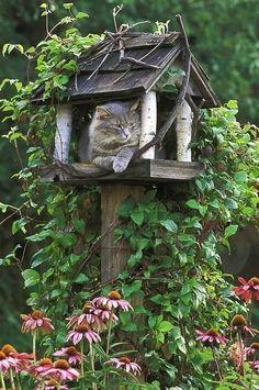 cat in bird feeder!