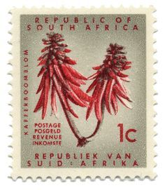 Picture of SOUTH AFRICA - CIRCA 1965 A stamp printed in South Africa shows Erythrina caffra, circa 1965 stock photo, images and stock photography.