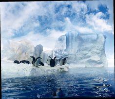 48.00$  Watch now - http://ali1j2.worldwells.pw/go.php?t=32580122623 - 10x10ft  Frozen Backdrop Vinyl Custom Photography Backdrops Prop Muslin Background BX-02 48.00$