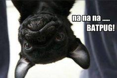 BATPUG!! :D