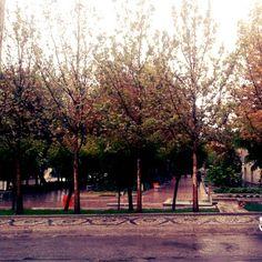 پردیس فنی دانشگاه تهران در یک روز بارانی Photo by: Maryam Azadeh