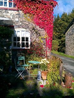 The gorgeous colours of Autumn at Bliss Cottage x
