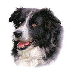 Aron Gadd Pet Portrait Gallery