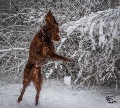 Sneeuw! http://www.rezon.org/