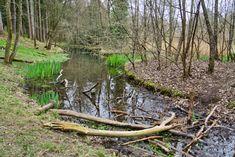 Lechpark Poessinger Au Garden Bridge, Outdoor Structures, Woodland Forest, Water, Animales