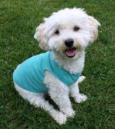 small dog tshirt puppy clothes small dog shirt chihuahua