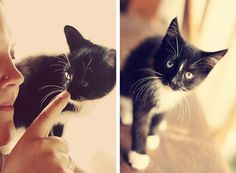 That's what MY kitten looked like! Then I had to give him away... :'(