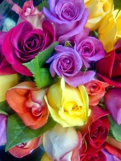Rose Bouquet - love the colors All Flowers, Amazing Flowers, Beautiful Roses, Beautiful Flowers, Pretty Roses, Flower Colors, Romantic Roses, Colours, Simply Beautiful