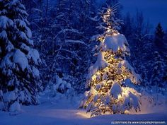 Snow Fall 3d Christmas Trees Wallpapers