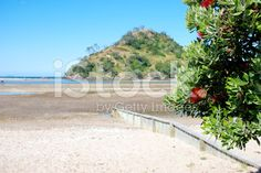 New Zealand Pohutukawa & Seascape; New Zealand Beach, Free Stock, Kiwiana, Fresh Image, Beach Fun, Beach Photos, Image Now, Beautiful Beaches, Summer Days