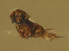 DACHSHUND CHARMING DOG GREETINGS NOTE CARD BEAUTIFUL LONG HAIRED DOG SITTING | eBay