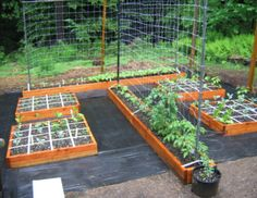 While on a gardening site, I came across the Square Foot Gardening method. As I have horrible soil in my backyard that no amount of amending will help due to large tree roots sucking all the nutrients out of the soil, I was interested in this method of gardening as you don't even need to use dirt.   With the raised box gardens, you use the following mixture:  1/3 Blended Compost  1/3 Peat Moss  1/3 Coarse Vermiculite