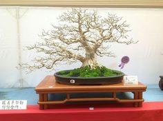 Bonsai Art, Planter Pots, Shapes, Drawings, Nature, Plants, Beautiful, Gardens, Spirit