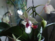 DIY: How Not to Kill an Orchid by Michelle Slatalla from Gardenista