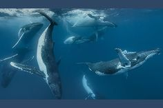 Подводный фотограф Даррен Джу рассказал, что гонялся за этим снимком двадцать лет.