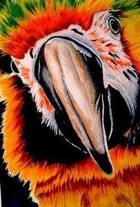 Fine Art Print Macaw by carolynnzart on Ebay. Thank you!