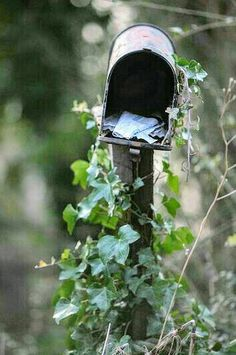 ILLustrious Ivy Cottage