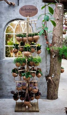 succulent project using coconut - Google Search