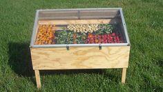 Construye un deshidratador en tu jardín y disfruta todo el año de los más deliciosos alimentos