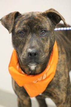 ADOPTED>NAME: Junior  ANIMAL ID: 34123387  BREED: Hound mix  SEX: male  EST. AGE: 2 yr  Est Weight: 46 lbs  Health: Heartworm neg  Temperament: dog friendly, people friendly  ADDITIONAL INFO: RESCUE PULL FEE: $35  Intake date: 12/2 Available: Now