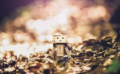 Danbo kissed by the sun