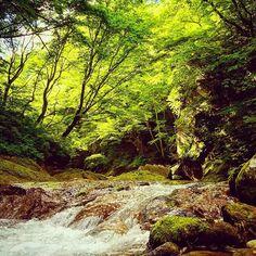 【playforest.ko】さんのInstagramをピンしています。 《久しぶりの晴れ間。 木漏れ日と冷たい山水  川のせせらぎが心地良い初夏の森  #森…