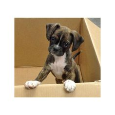 Buddy the Mixed Breed ❤ liked on Polyvore