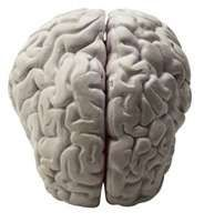 University of Alabama at Birmingham researchers have proposed a model that resolves a seeming paradox in one of the most intriguing areas of the brain—the dentate gyrus.